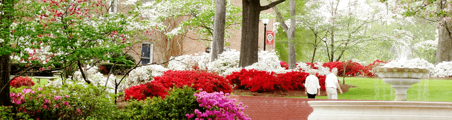 Flowers and greenery on campus